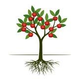 Árvore verde do verão com maçã e raiz vermelhas Ilustração do vetor Imagens de Stock Royalty Free