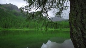 Árvore verde em um lago das montanhas video estoque