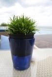 Árvore verde em uns potenciômetros azuis foto de stock royalty free