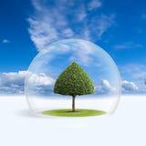 A árvore verde está sob a proteção Fotografia de Stock Royalty Free