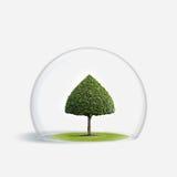 A árvore verde está sob a proteção Foto de Stock Royalty Free