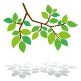 Árvore verde fresca ilustração do vetor