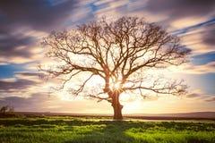 Árvore verde grande em um campo, nuvens dramáticas fotografia de stock royalty free