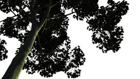 Árvore verde grande isolada no fundo branco Fotos de Stock Royalty Free