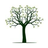 Árvore verde Ilustração do vetor Imagem de Stock