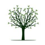 Árvore verde Ilustração do vetor Fotografia de Stock Royalty Free