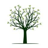 Árvore verde Ilustração do vetor Planta e jardim Fotografia de Stock