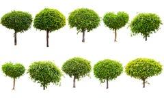 Árvore verde isolada em um fundo branco Imagem de Stock