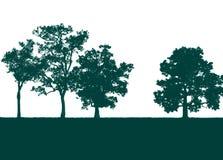 Árvore verde isolada no branco Imagens de Stock Royalty Free