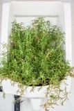 Árvore verde no mictório branco imagens de stock royalty free