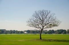 Árvore verde no parque Imagens de Stock