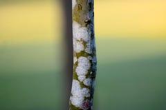 A árvore verde parte a fotografia conservada em estoque Fotos de Stock Royalty Free