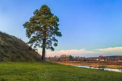 Árvore verde perto do monte e do rio Foto de Stock Royalty Free