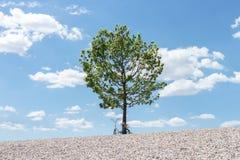Árvore verde sobre um monte com a bicicleta que descansa nela, céu azul com as nuvens brancas no fundo Foto de Stock Royalty Free