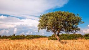Árvore verde solitária em um céu liso e azul rural com filme
