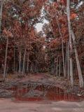 Árvore vermelha imagens de stock royalty free
