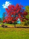 Árvore vermelha 01, arte de Digitas por Afonso Farias fotos de stock royalty free