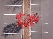 Árvore vermelha do tempo do outono no parque de estacionamento imagens de stock