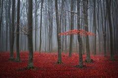 Árvore vermelha em uma floresta nevoenta do outono