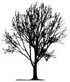 Árvore (vetor) Fotos de Stock Royalty Free