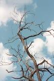 Árvore Withered imagem de stock
