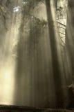 Árvores 1 Imagens de Stock