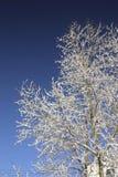 Árvores 10 Foto de Stock Royalty Free