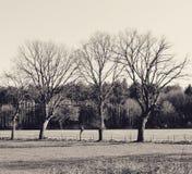 3 árvores Fotografia de Stock Royalty Free