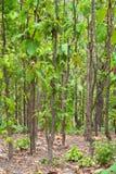Árvores Fotos de Stock Royalty Free