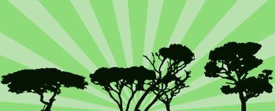 Árvores Foto de Stock
