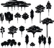 Árvores. Fotos de Stock Royalty Free