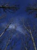 Árvores 2 Imagem de Stock Royalty Free