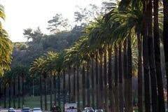 Árvores #2 da tâmara Fotografia de Stock Royalty Free