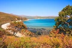 Árvores 2 do litoral Fotografia de Stock