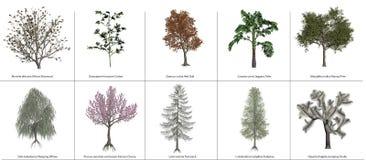 Árvores 3 ilustração stock