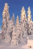 Árvores Imagens de Stock Royalty Free
