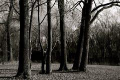 Árvores Fotos de Stock