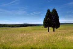 2 árvores Fotografia de Stock Royalty Free