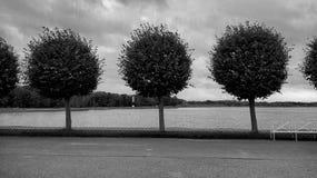 Árvores Imagens de Stock