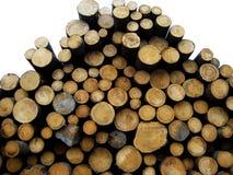 Árvores abatidas Fotos de Stock Royalty Free