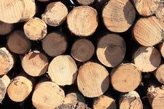 Árvores abatidas Imagem de Stock