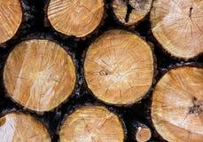 Árvores abatidas com fundo do close up dos nós Imagens de Stock Royalty Free
