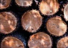 Árvores abatidas com uma camomila pequena Fotografia de Stock Royalty Free