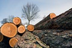 Árvores abatidas em jutland sul fotos de stock