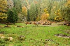 Árvores abatidas no prado fotos de stock