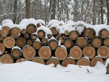 Árvores abatidas sob a neve na floresta imagens de stock