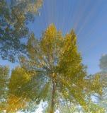 Árvores abstratas Fotos de Stock
