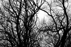 Árvores abstratas Imagem de Stock