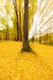 Árvores abstratas do outono Imagem de Stock Royalty Free