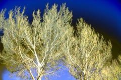 Árvores acima ateadas fogo imagem de stock royalty free